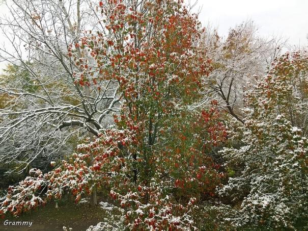 snow1 (2)