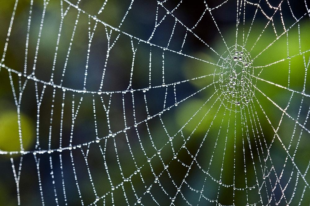 dew on a web