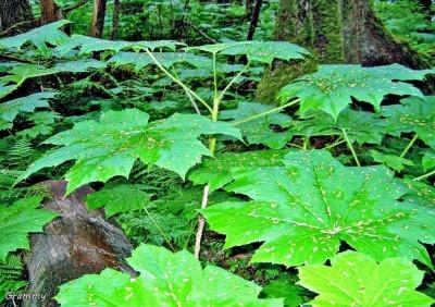 foliage (3)